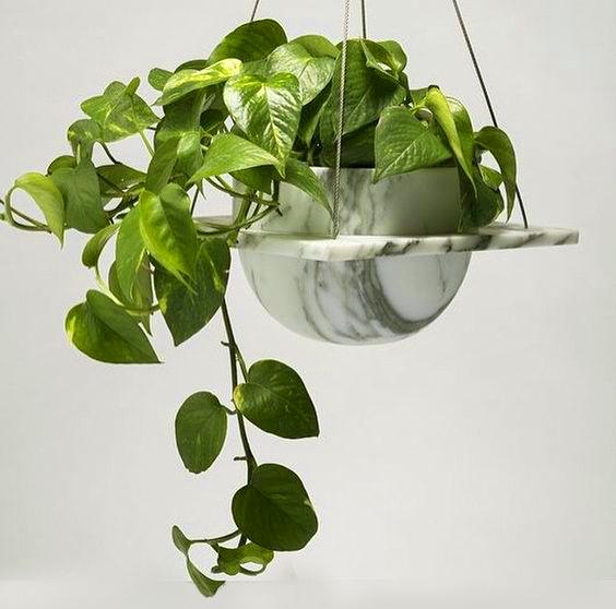 نگهداری پتوس 🌵 | ابلق، مرمری، گل رونده | کافه گلدون فروشگاه اینترنتی گل و گیاه