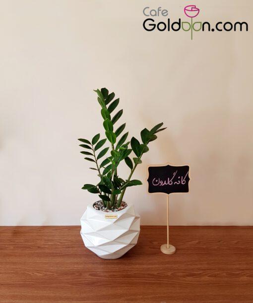 خرید زامیفولیا با گلدان سرامیکی متوسط