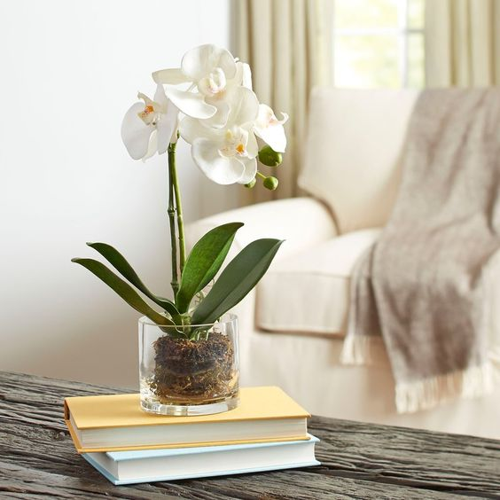 انواع گل ارکیده