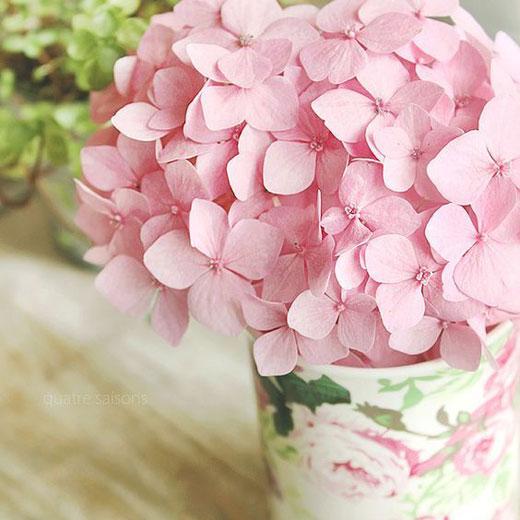 گل ادریسی یا هورتانسیا | پروش و نگهداری گل هورتانسیا یا ادریسی | کافه گلدون