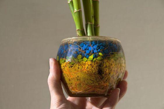 تعویض گلدان بامبو