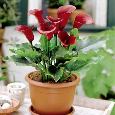 خاک مناسب برای گل شیپوری