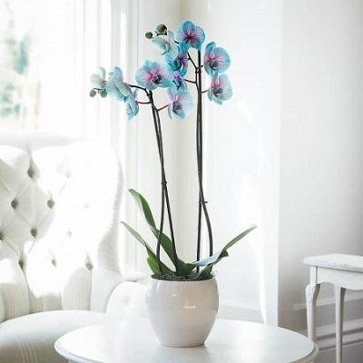 طرز نگهداری گل ارکیده
