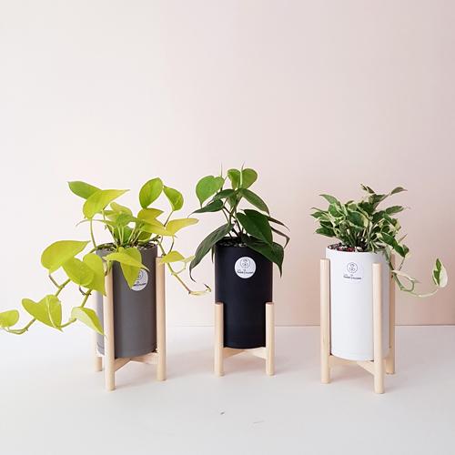 گلدان آپارتمانی