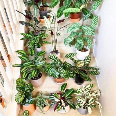 مناسب ترین گل برای تبریک