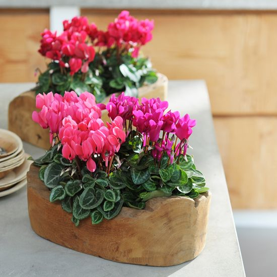 پر فروش ترین گلهای آپارتمانی