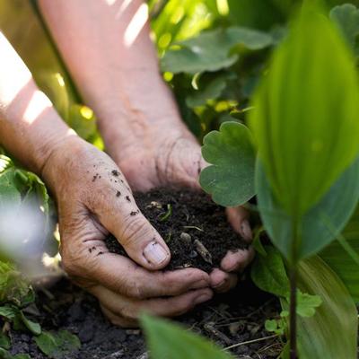 معرفی بعترین خاک برای گلدان