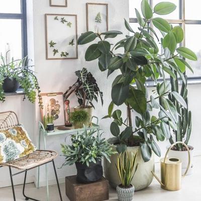 معرفی بهترین گلهای آپارتمانی