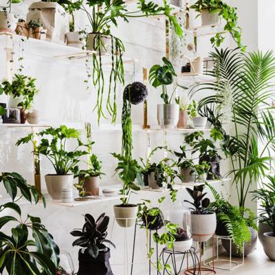 گیاهان سریع الرشد