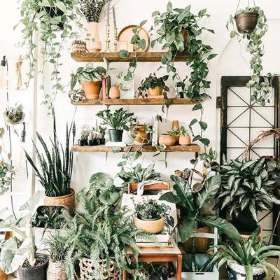 انواع گیاهان آپارتمانی
