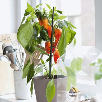 گیاهان خوراکی مناسب برای منزل